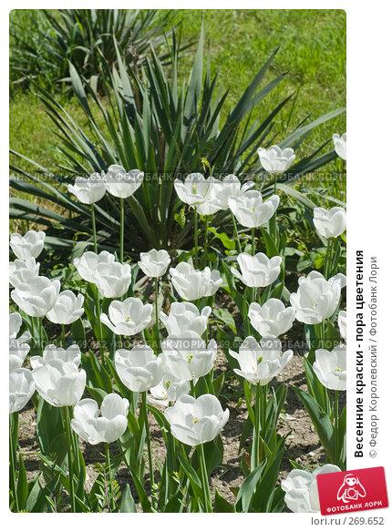 Весенние краски - пора цветения, фото № 269652, снято 1 мая 2008 г. (c) Федор Королевский / Фотобанк Лори