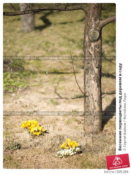 Весенние первоцветы под деревом в саду, фото № 209284, снято 1 апреля 2007 г. (c) Сергей Байков / Фотобанк Лори