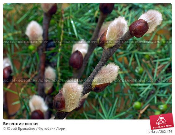 Купить «Весенние почки», фото № 202476, снято 7 февраля 2008 г. (c) Юрий Брыкайло / Фотобанк Лори