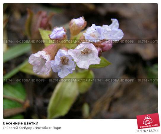 Весенние цветки, фото № 18744, снято 22 апреля 2006 г. (c) Сергей Ксейдор / Фотобанк Лори