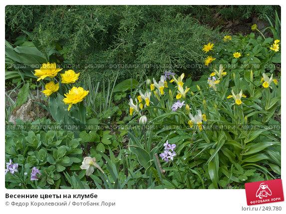 Купить «Весенние цветы на клумбе», фото № 249780, снято 12 апреля 2008 г. (c) Федор Королевский / Фотобанк Лори