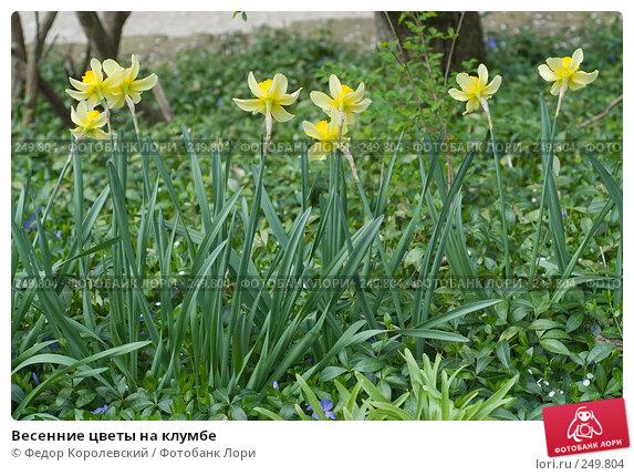 Весенние цветы на клумбе, фото № 249804, снято 12 апреля 2008 г. (c) Федор Королевский / Фотобанк Лори