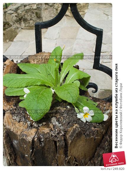 Купить «Весенние цветы на клумбе из старого пня», фото № 249820, снято 12 апреля 2008 г. (c) Федор Королевский / Фотобанк Лори
