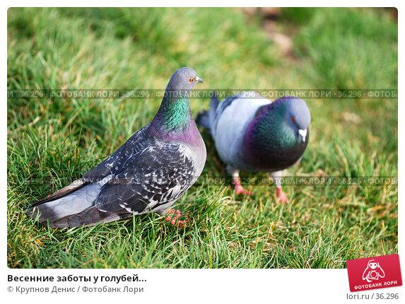 Весенние заботы у голубей..., фото № 36296, снято 27 марта 2007 г. (c) Крупнов Денис / Фотобанк Лори