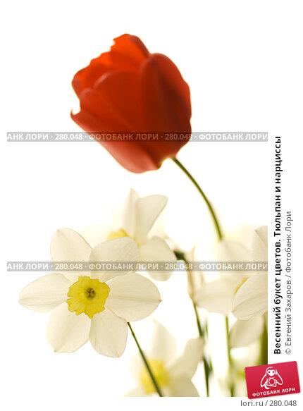 Купить «Весенний букет цветов. Тюльпан и нарциссы», фото № 280048, снято 3 мая 2008 г. (c) Евгений Захаров / Фотобанк Лори