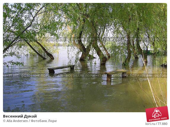 Весенний Дунай, фото № 77880, снято 7 января 2005 г. (c) Alla Andersen / Фотобанк Лори