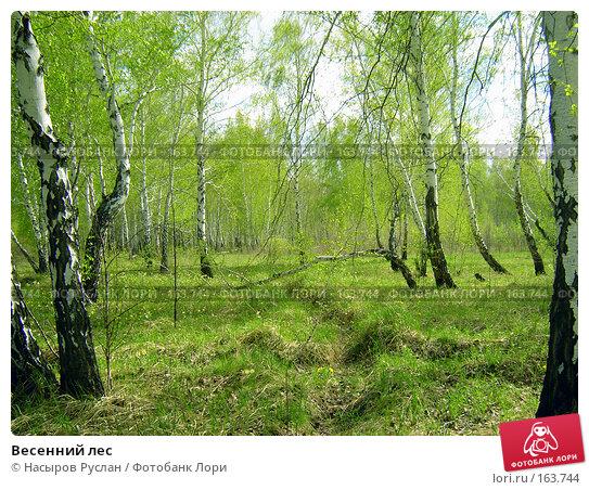 Купить «Весенний лес», фото № 163744, снято 12 мая 2007 г. (c) Насыров Руслан / Фотобанк Лори