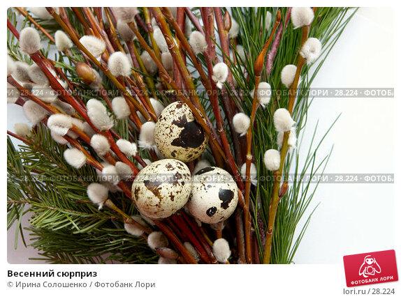 Весенний сюрприз, фото № 28224, снято 26 марта 2007 г. (c) Ирина Солошенко / Фотобанк Лори