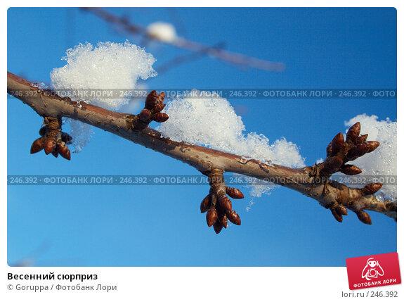 Весенний сюрприз, фото № 246392, снято 28 января 2007 г. (c) Goruppa / Фотобанк Лори