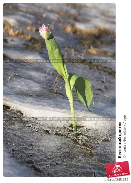 Весенний цветок, фото № 245632, снято 8 марта 2008 г. (c) hunta / Фотобанк Лори