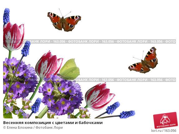 Весенняя композиция с цветами и бабочками, фото № 163056, снято 25 апреля 2017 г. (c) Елена Блохина / Фотобанк Лори