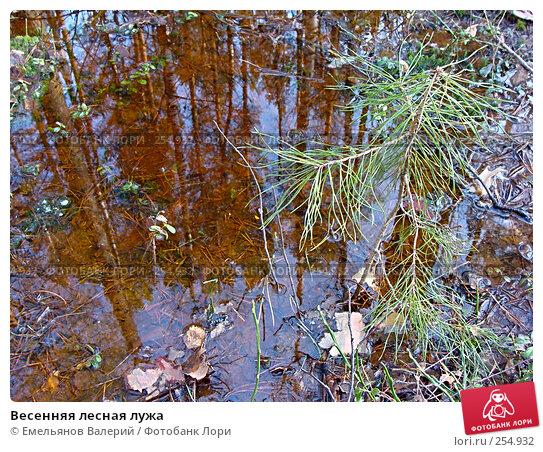 Весенняя лесная лужа, фото № 254932, снято 6 апреля 2008 г. (c) Емельянов Валерий / Фотобанк Лори