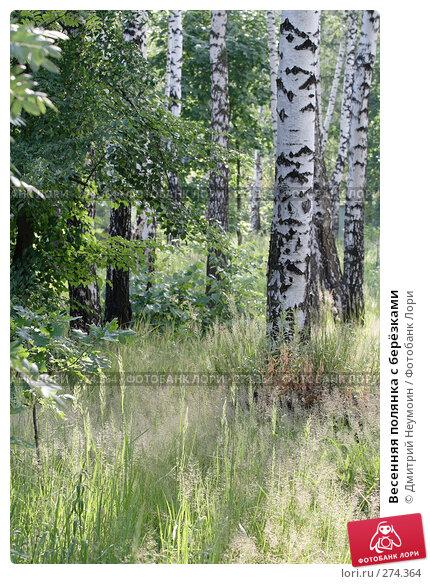 Весенняя полянка с берёзками, эксклюзивное фото № 274364, снято 28 июня 2007 г. (c) Дмитрий Неумоин / Фотобанк Лори