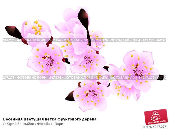 Весенняя цветущая ветка фруктового дерева, иллюстрация № 247276 (c) Юрий Брыкайло / Фотобанк Лори
