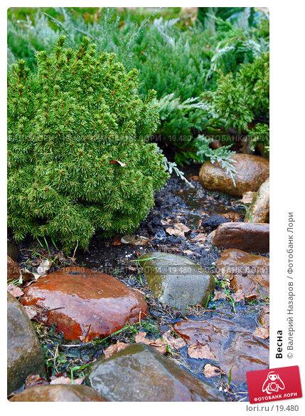 Весна, фото № 19480, снято 2 мая 2006 г. (c) Валерий Торопов / Фотобанк Лори