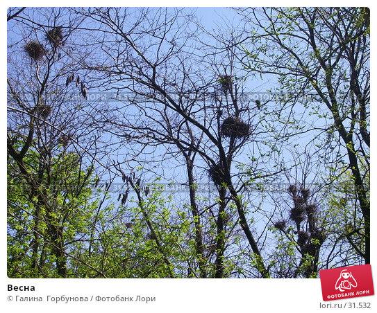 Весна, фото № 31532, снято 30 апреля 2005 г. (c) Галина  Горбунова / Фотобанк Лори