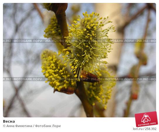Весна, фото № 258392, снято 12 апреля 2008 г. (c) Анна Финютина / Фотобанк Лори