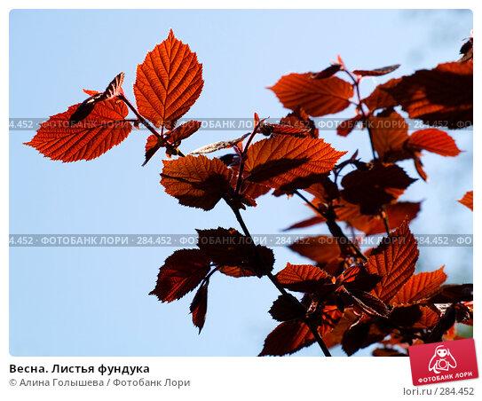 Весна. Листья фундука, эксклюзивное фото № 284452, снято 3 мая 2008 г. (c) Алина Голышева / Фотобанк Лори