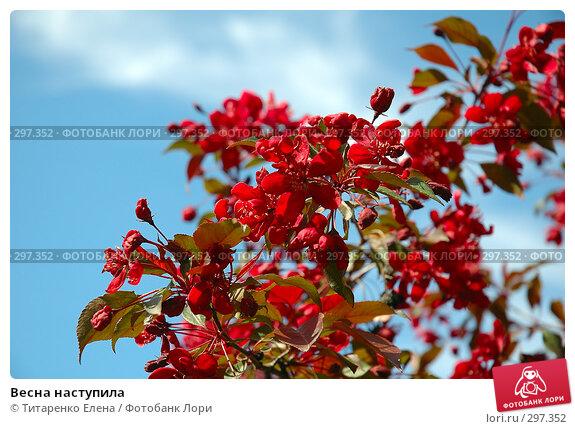 Весна наступила, фото № 297352, снято 20 апреля 2008 г. (c) Титаренко Елена / Фотобанк Лори
