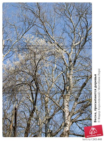 Весна, просыпаются деревья, фото № 243448, снято 4 апреля 2008 г. (c) Федор Королевский / Фотобанк Лори