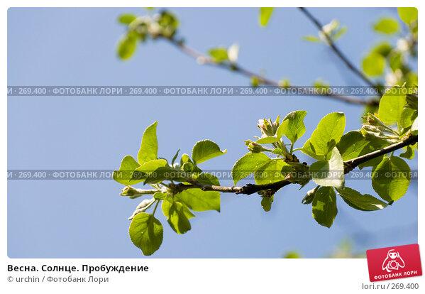 Весна. Солнце. Пробуждение, фото № 269400, снято 29 апреля 2008 г. (c) urchin / Фотобанк Лори