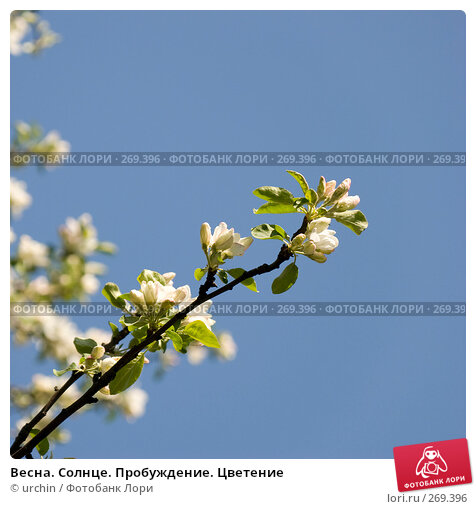 Купить «Весна. Солнце. Пробуждение. Цветение», фото № 269396, снято 29 апреля 2008 г. (c) urchin / Фотобанк Лори