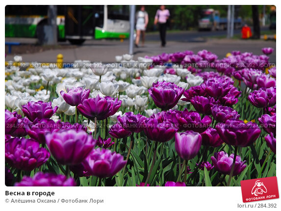 Весна в городе, эксклюзивное фото № 284392, снято 12 мая 2008 г. (c) Алёшина Оксана / Фотобанк Лори