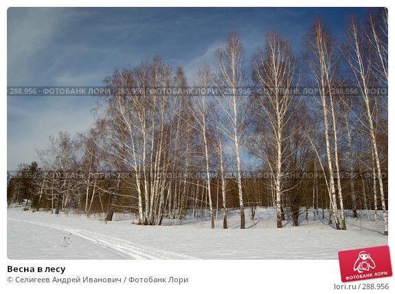 Весна в лесу, фото № 288956, снято 22 марта 2008 г. (c) Селигеев Андрей Иванович / Фотобанк Лори