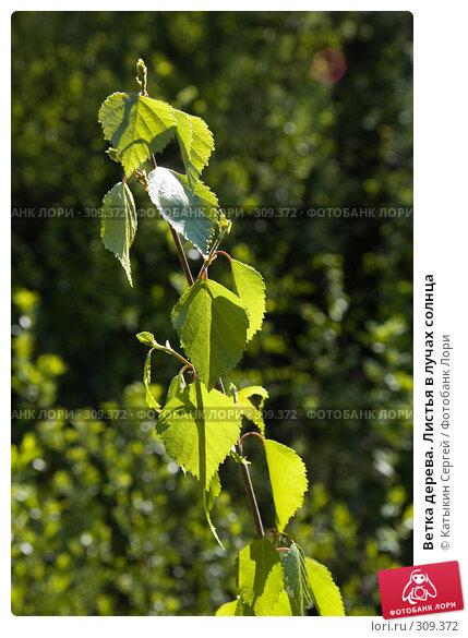 Ветка дерева. Листья в лучах солнца, фото № 309372, снято 17 мая 2008 г. (c) Катыкин Сергей / Фотобанк Лори