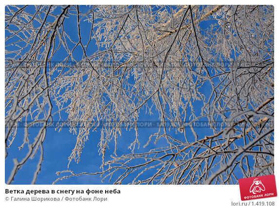 Купить «Ветка дерева в снегу на фоне неба», эксклюзивное фото № 1419108, снято 13 декабря 2009 г. (c) Галина Шорикова / Фотобанк Лори