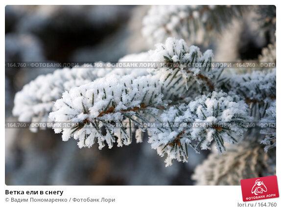 Купить «Ветка ели в снегу», фото № 164760, снято 1 декабря 2007 г. (c) Вадим Пономаренко / Фотобанк Лори