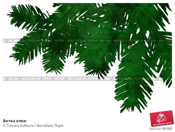 Купить «Ветка елки», иллюстрация № 98980 (c) Tamara Kulikova / Фотобанк Лори
