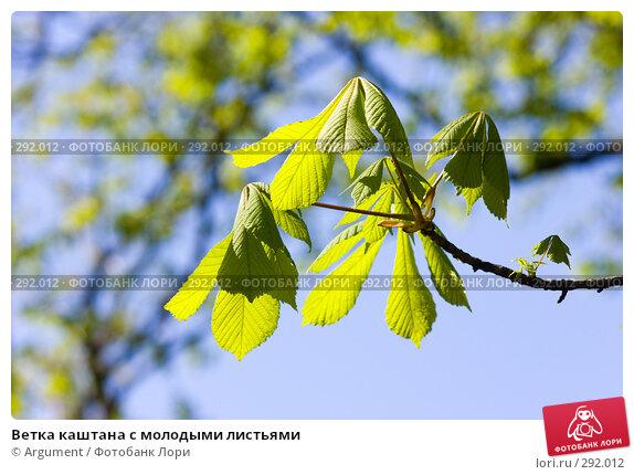 Ветка каштана с молодыми листьями, фото № 292012, снято 24 апреля 2008 г. (c) Argument / Фотобанк Лори