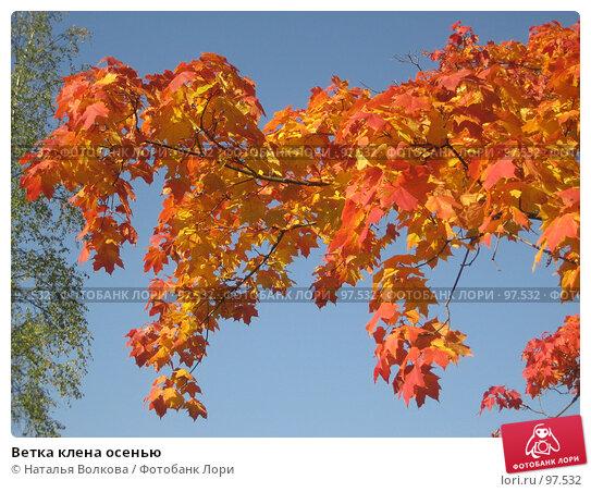 Ветка клена осенью, эксклюзивное фото № 97532, снято 22 сентября 2007 г. (c) Наталья Волкова / Фотобанк Лори