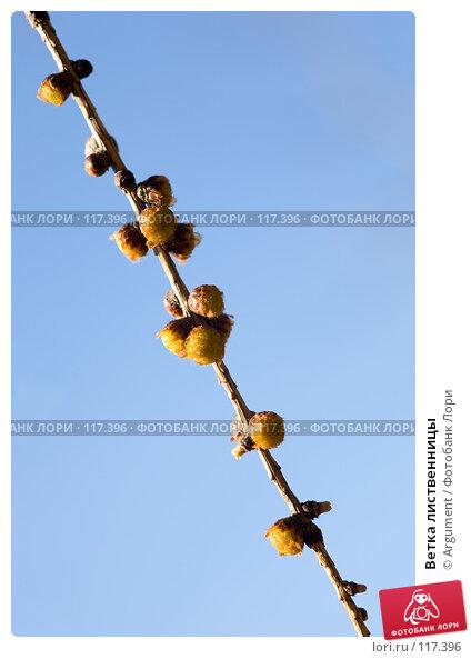 Ветка лиственницы, фото № 117396, снято 9 апреля 2007 г. (c) Argument / Фотобанк Лори