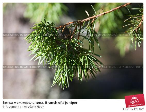 Ветка можжевельника. Branch of a juniper, фото № 128872, снято 1 мая 2007 г. (c) Argument / Фотобанк Лори