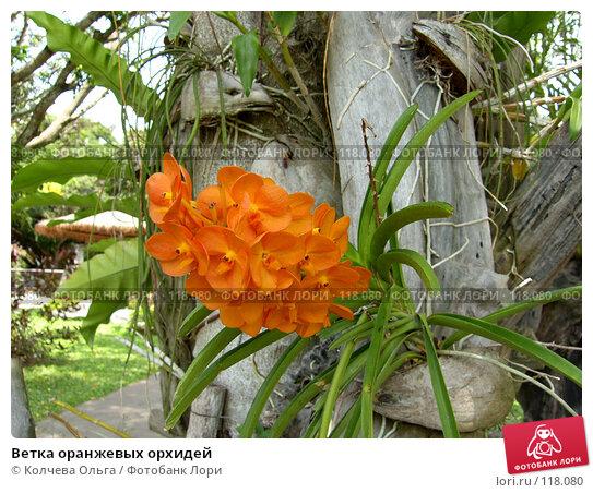 Ветка оранжевых орхидей, фото № 118080, снято 25 марта 2007 г. (c) Колчева Ольга / Фотобанк Лори