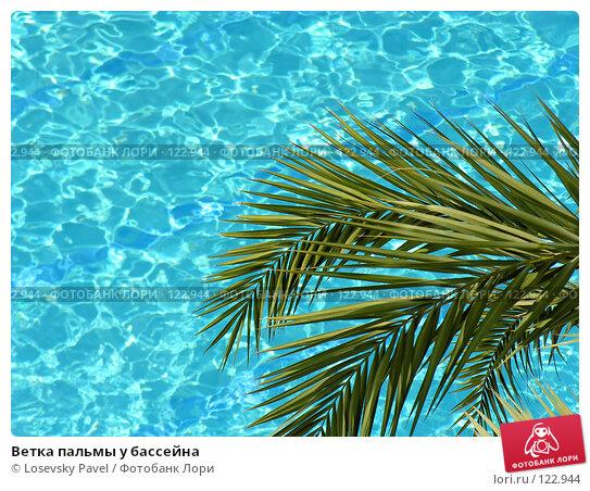 Купить «Ветка пальмы у бассейна», фото № 122944, снято 13 мая 2005 г. (c) Losevsky Pavel / Фотобанк Лори