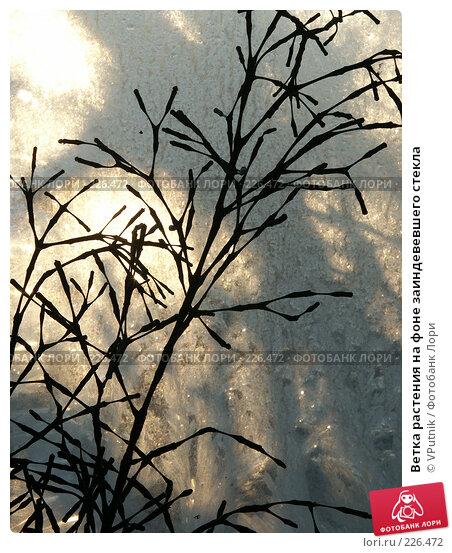 Ветка растения на фоне заиндевевшего стекла, фото № 226472, снято 20 декабря 2006 г. (c) VPutnik / Фотобанк Лори