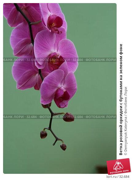 Ветка розовой орхидеи с бутонами на зеленом фоне, фото № 32684, снято 11 апреля 2007 г. (c) Demyanyuk Kateryna / Фотобанк Лори