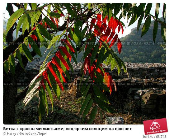 Ветка с красными листьями, под ярким солнцем на просвет, фото № 63748, снято 17 октября 2003 г. (c) Harry / Фотобанк Лори