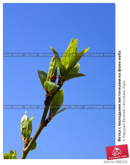 Ветка с молодыми листочками на фоне неба, фото № 295212, снято 23 апреля 2017 г. (c) Парушин Евгений / Фотобанк Лори
