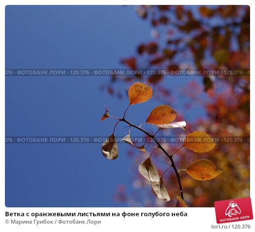 Ветка с оранжевыми листьями на фоне голубого неба, фото № 120376, снято 23 сентября 2007 г. (c) Марина Грибок / Фотобанк Лори