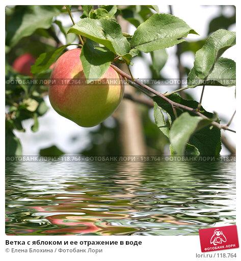 Купить «Ветка с яблоком и ее отражение в воде», иллюстрация № 118764 (c) Елена Блохина / Фотобанк Лори