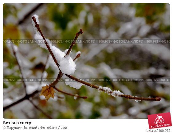 Ветка в снегу, фото № 100972, снято 20 августа 2017 г. (c) Парушин Евгений / Фотобанк Лори