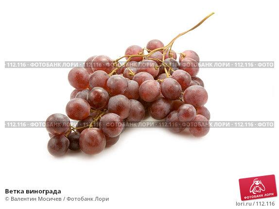 Ветка винограда, фото № 112116, снято 10 декабря 2006 г. (c) Валентин Мосичев / Фотобанк Лори