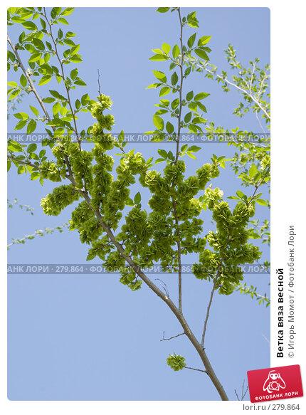 Ветка вяза весной, фото № 279864, снято 10 мая 2008 г. (c) Игорь Момот / Фотобанк Лори