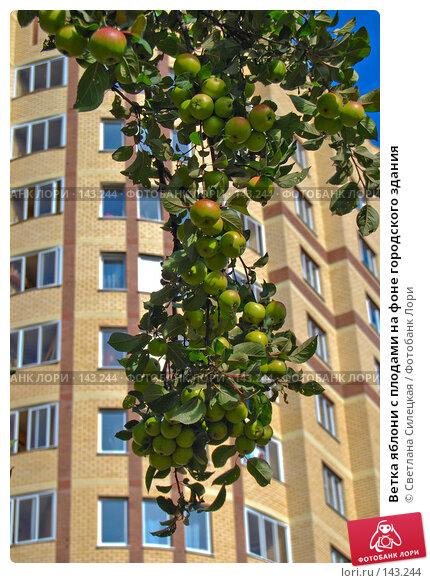 Ветка яблони с плодами на фоне городского здания, фото № 143244, снято 24 сентября 2007 г. (c) Светлана Силецкая / Фотобанк Лори