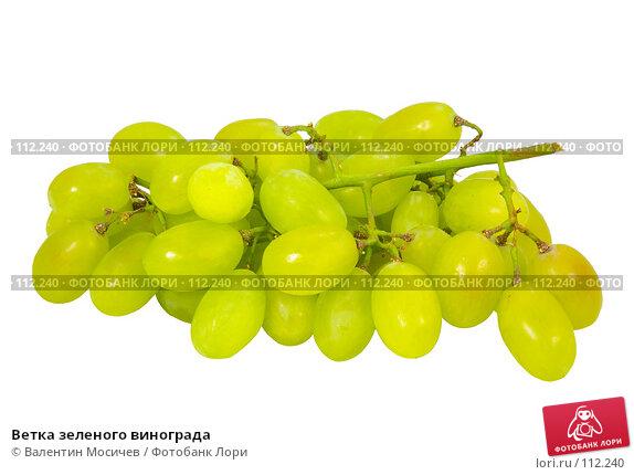 Ветка зеленого винограда, фото № 112240, снято 20 января 2007 г. (c) Валентин Мосичев / Фотобанк Лори