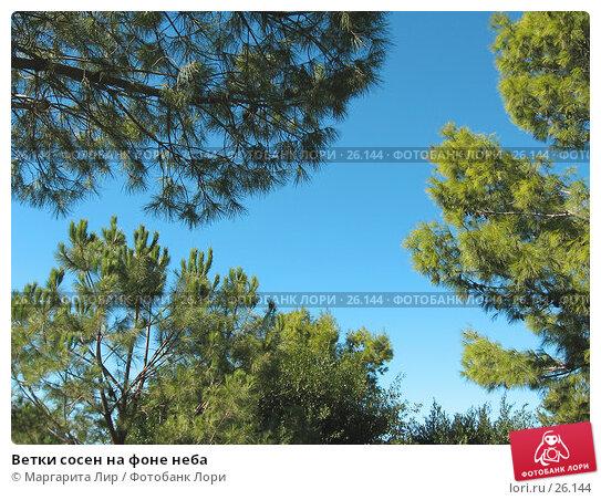 Ветки сосен на фоне неба, фото № 26144, снято 3 ноября 2006 г. (c) Маргарита Лир / Фотобанк Лори